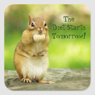 Diet Starts Tomorrow Chipmunk Square Sticker