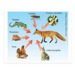 dietaraposa11 esquema didático dieta da raposa postal