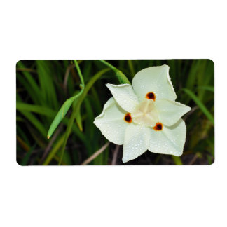 Dietes Bicolor African Iris Fortnight Lily Label