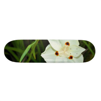 Dietes Bicolor African Iris Fortnight Lily Skateboard Deck