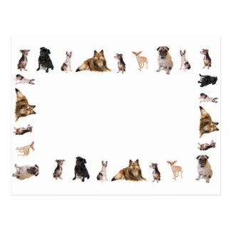 Different dog breeds in a row postcard