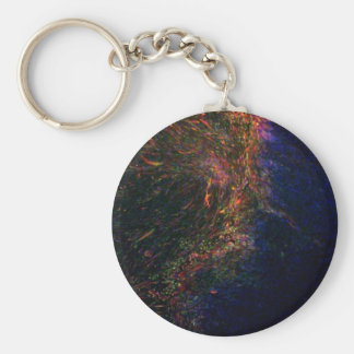 Differentiated pluripotent stem cells keychain