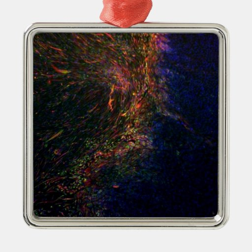 Differentiated pluripotent stem cells christmas ornaments