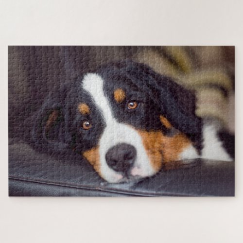 Difficult Pets 20 x 30 Jigsaw Puzzle