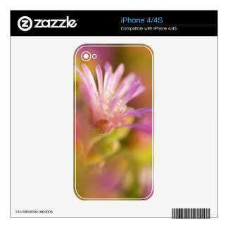 Diffused Image Of A Colorful Succulent Flower Decal For The iPhone 4S