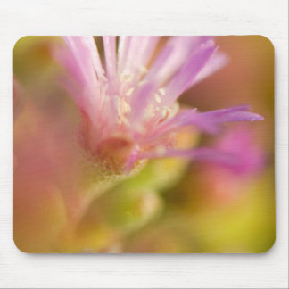 Diffused Image Of A Colorful Succulent Flower Mouse Pad