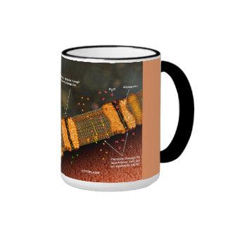 Diffusion through a cell membrane mug