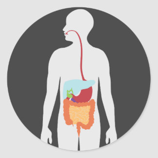 Digestive System Classic Round Sticker