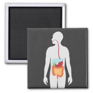 Digestive System Magnet