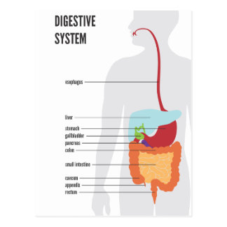 Digestive System Post Cards