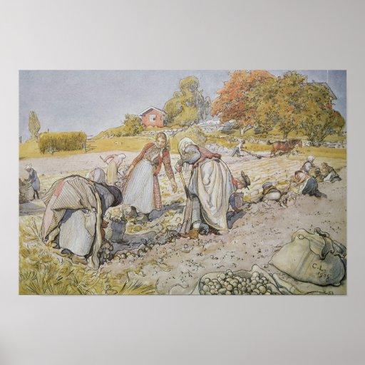 Digging Potatoes, 1905 Poster