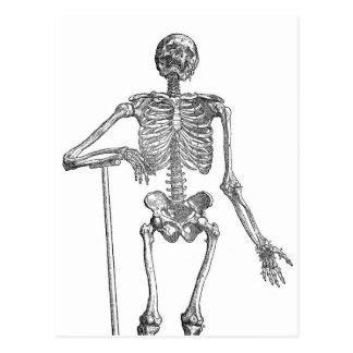 Digging Skeleton Illustration Postcard