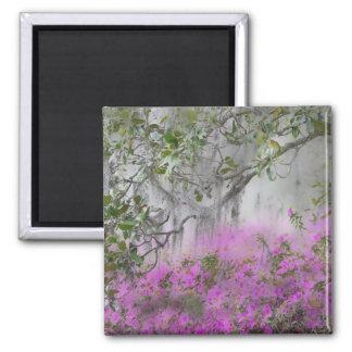 Digital Composite of Azaleas and magnolia tree 2 Inch Square Magnet