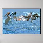 Digital Pelicans Poster