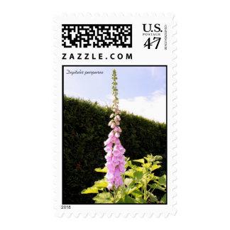 Digitalis purpurea (Common Foxglove) Postage