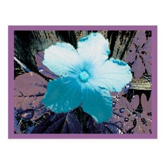 Digitally Manipulated Wildflower Postcard