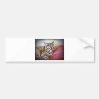 Digitally Painted Pussycat Bumper Sticker