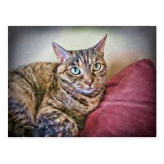 Digitally Painted Pussycat Postcard