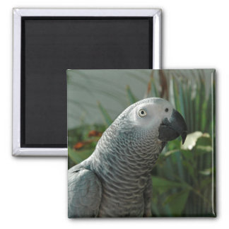 Dignified African Grey Parrot 2 Inch Square Magnet