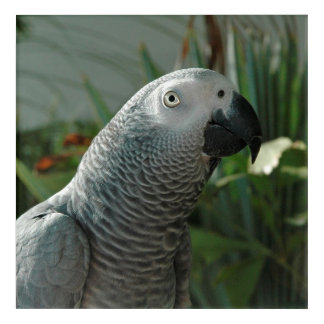 Dignified African Grey Parrot Acrylic Wall Art