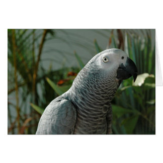 Dignified African Grey Parrot Card