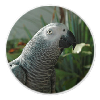 Dignified African Grey Parrot Ceramic Knob
