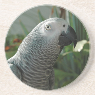 Dignified African Grey Parrot Coaster