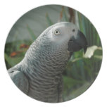 Dignified African Grey Parrot Dinner Plate