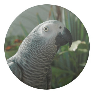 Dignified African Grey Parrot Eraser