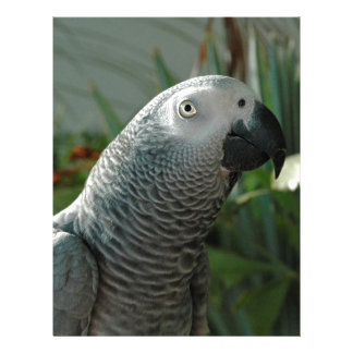 Dignified African Grey Parrot Letterhead