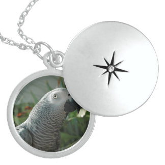 Dignified African Grey Parrot Locket Necklace