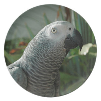 Dignified African Grey Parrot Melamine Plate