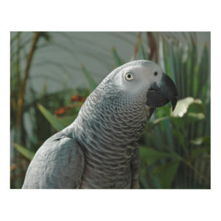 Dignified African Grey Parrot Panel Wall Art
