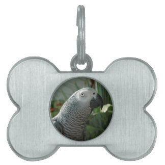 Dignified African Grey Parrot Pet Tag