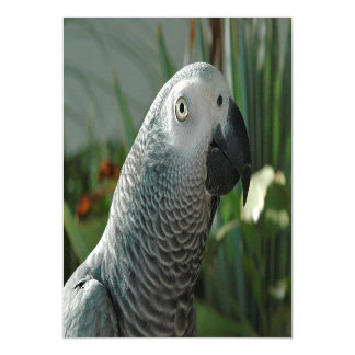 Dignified African Grey Parrot Magnetic Invitations