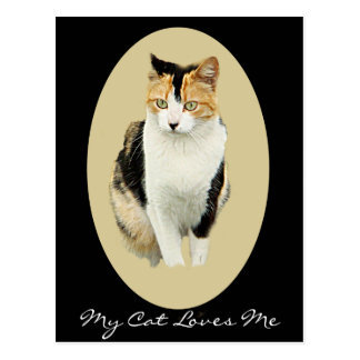 Dignified Cat Postcard