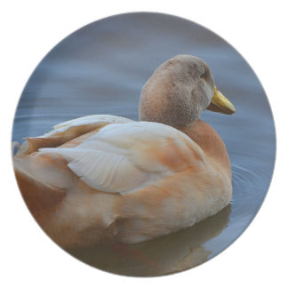 Dignified Duck Plate