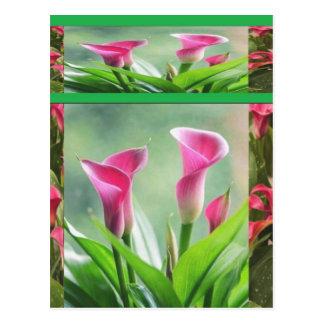 DIL Garden Hogaya : Flowers LEAF Postcard
