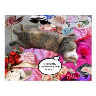 Dilema de princesa Tatus Cat