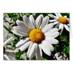 Dill Daisy White Greeting Card