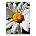 Dill Daisy White Greeting Cards