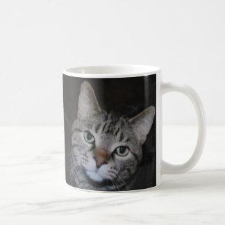Dillan la taza del gato