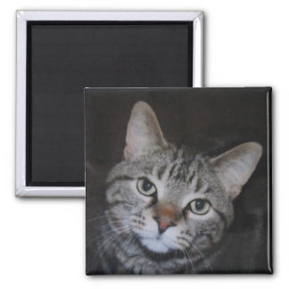 Dillan The Cat 2 Inch Square Magnet