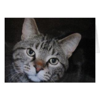 Dillan The Cat Card
