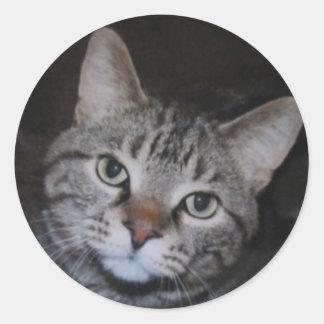 Dillan The Cat Classic Round Sticker