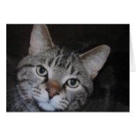 Dillan The Cat Greeting Card