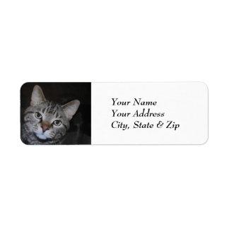 Dillan The Cat Label