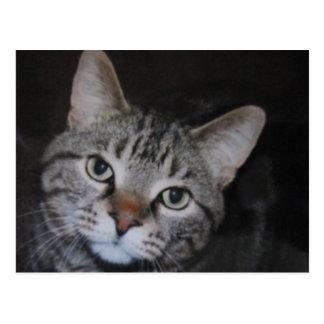 Dillan The Cat Postcard