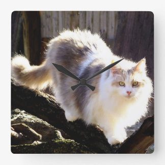 Dilute Calico Maine Coon Cat Clock