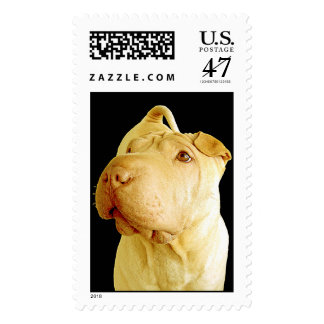 Dilute Chinese Shar Pei Puppy Dog Postage